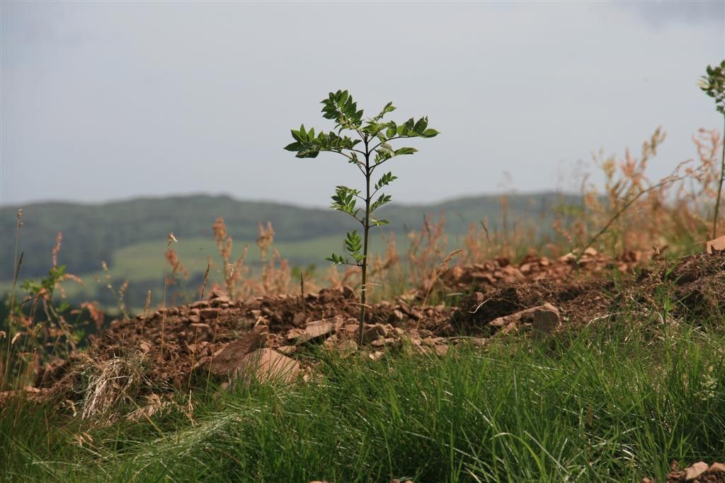 Developing the Woodland Carbon Code