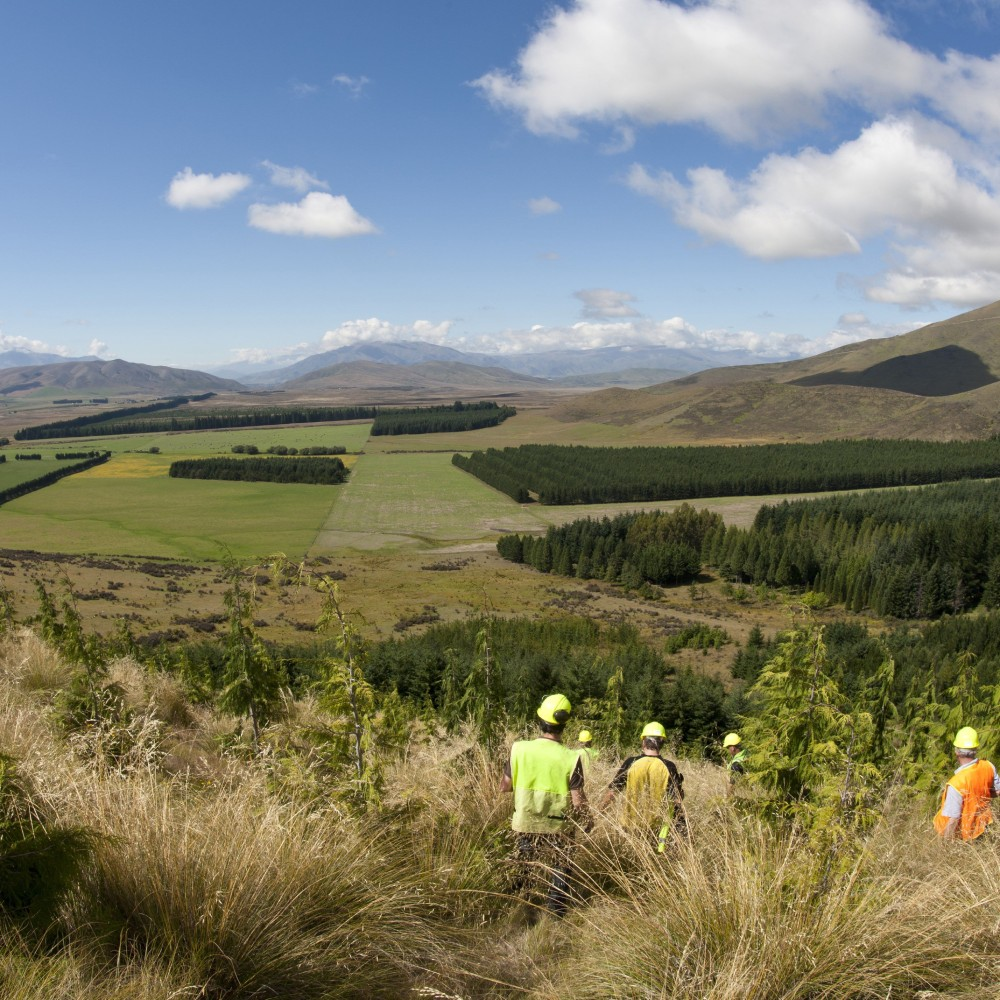 Tree Plantations in the Landscape