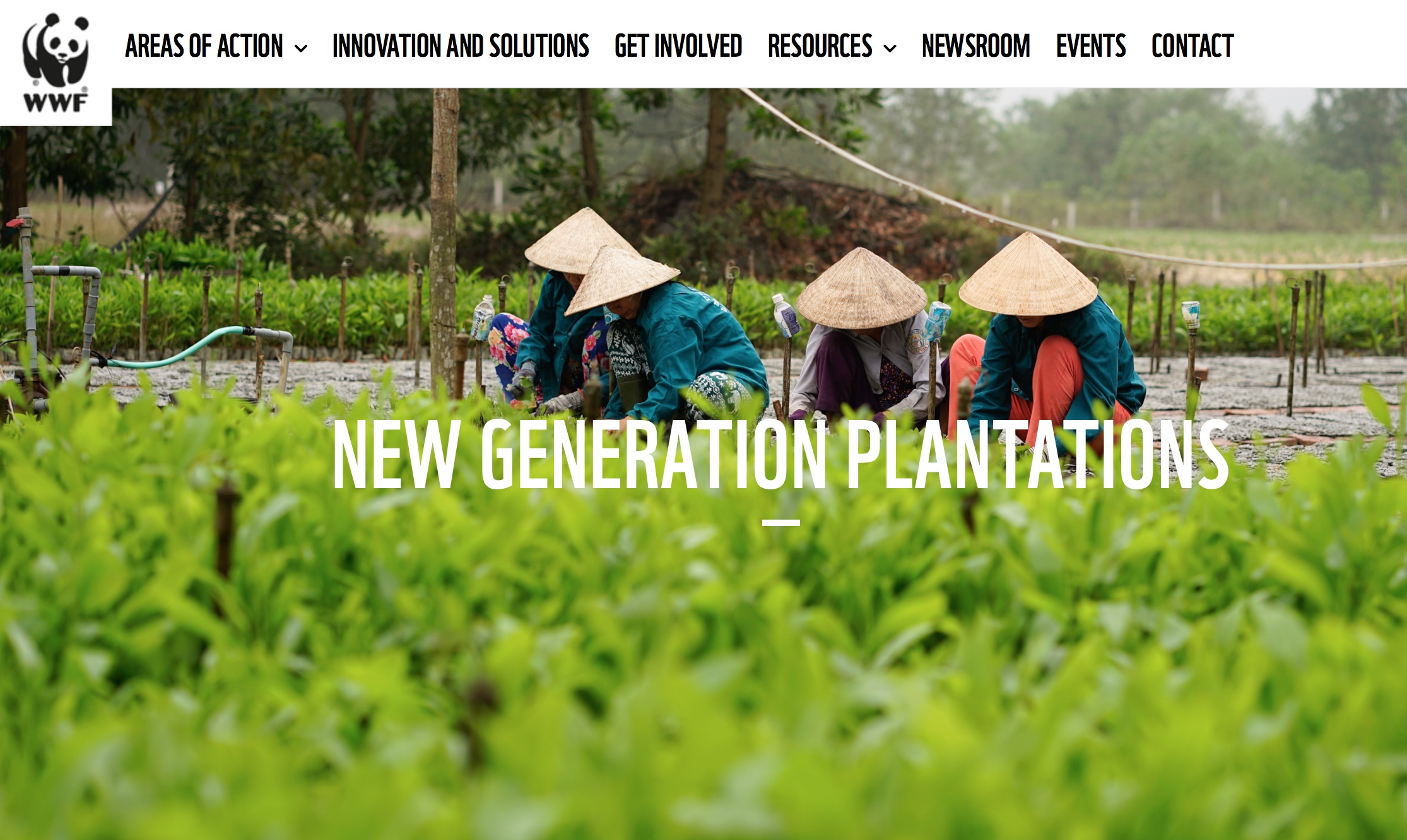 WWF Forests Forward implements the New Generation Plantations concept